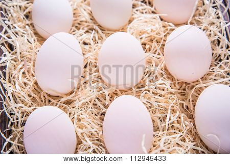 Farm Fresh White Eggs