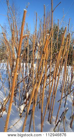 Withered Stems Plants
