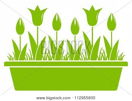 Tulips In Planter