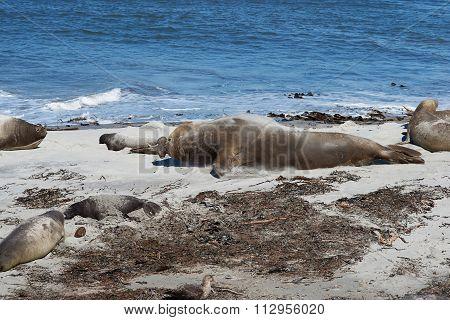 Beachmaster
