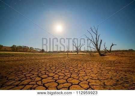Global warming concept. dead tree under hot sunset,  drought cracked desert landscape
