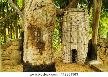 Bamboo bird trap hanging in tree in summer