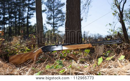 Rifle And Trees
