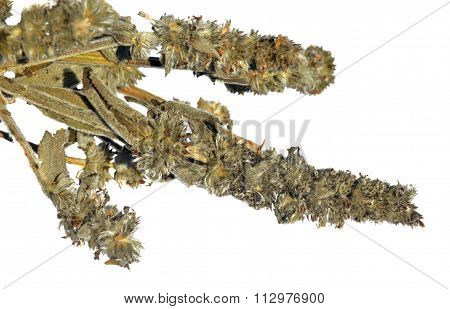 Dried Woundwort