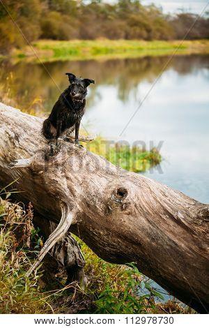 Small Size Black Dog in grass near river, lake