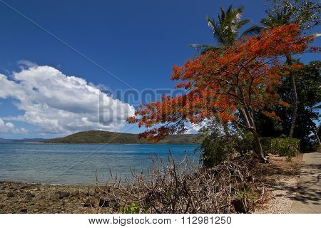 Daydream Island, Whitsundays, Queensland, Australia