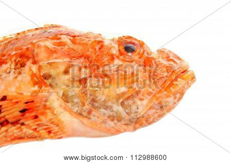 Fresh red fish