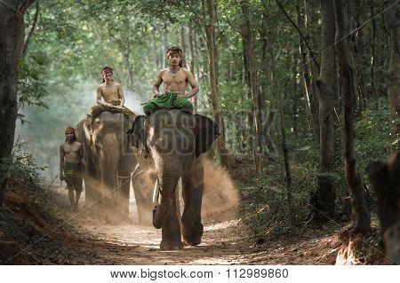 Mahout Shepherd Elephant