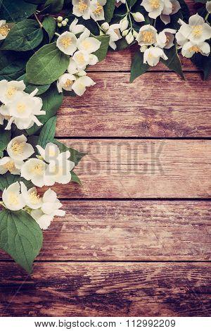 Vintage Jasmine Flowers