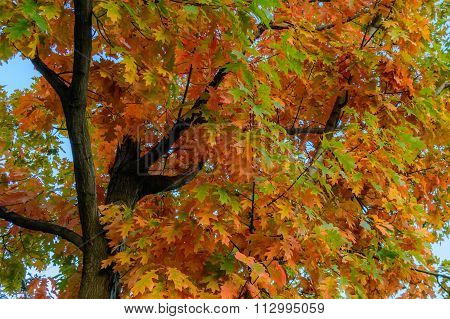 Autumn Leaves On A Clear Sky Background. Horizontal View Of Autumn Leaves In A Sunny Day, With A Cle