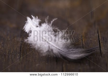 feather of bird on a wooden surface