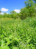 pic of winnebago  - A field of dense vegetation at Blackhawk Springs Forest Preserve in northern Illinois - JPG