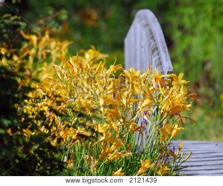 Flowers By The Foot Bridge
