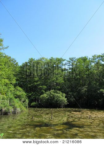 Green Pond and Blue Sky