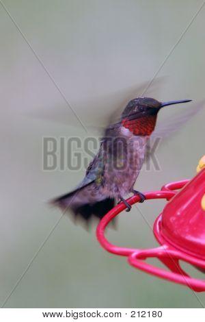Hummingbird Takeoff