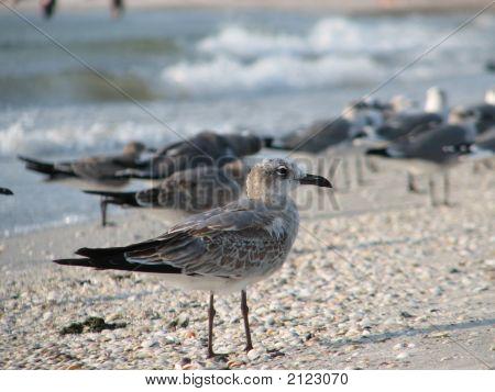 Social Seagull