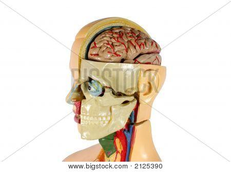 menschliche Struktur