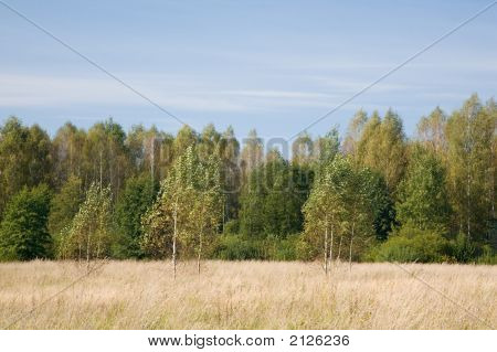 Grassy Abandoned Field And Edge Of Deciduous Forest
