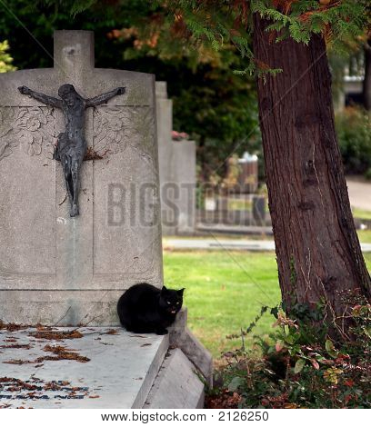 Black Cat On A Tombstone