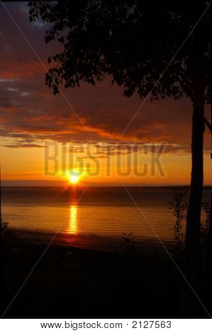 Knik Treed Sunset
