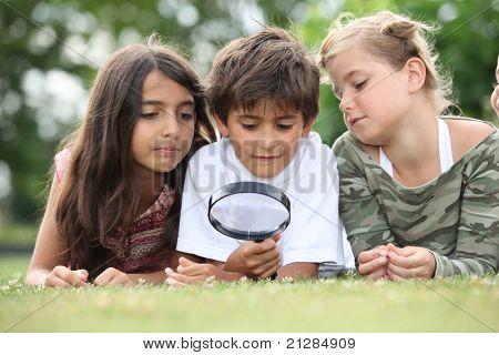 Niños mirar insectos