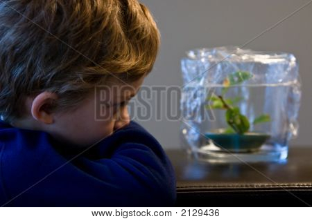 Watching A Pet Frog