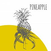 Pineapple Or Ananas Fruit Vector Botanical Illustration Sketch Plant poster
