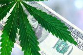 Money With Marijuana. Hundred Dollar Bill And Marijuana. Sheet Of Marijuana On A Hundred Dollar Bill poster