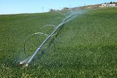 image of klamath  - Mechanical wheels and pipeline deliver water to this alfalfa field in Klamath county OR - JPG