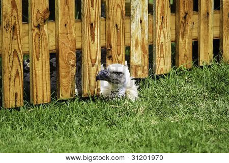 Bird Peeking Under Wooden Fence
