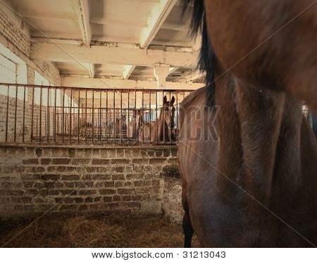Horses are in stalls