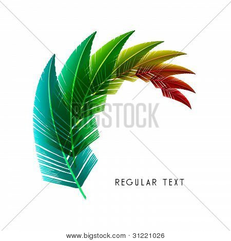 Vector Feather Design