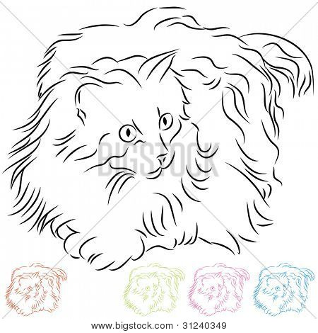 An image of a long haired ragdoll cat.