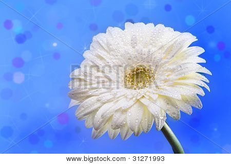 White daisy on a blue abstract background