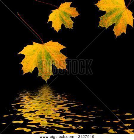 Trio Of Golden Leaves