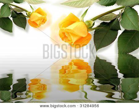 Roses At Spring