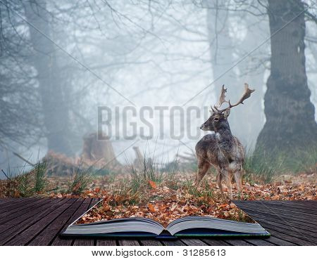 Fallow Deer Stag In Pages Of Magical Book