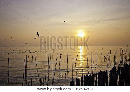 The Seagull And Seascape