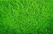 Green Grass Texture Background, Green Lawn, Backyard For Background, Grass Texture, Green Lawn Deskt poster