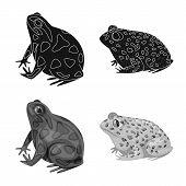 Vector Design Of Wildlife And Bog Logo. Collection Of Wildlife And Reptile Vector Icon For Stock. poster
