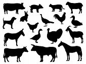 Set Of Silhouettes Of Domestic Farm Animals. Vector Illustration Livestock Isolated On White, Side V poster