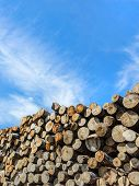 Close Up View Of A Stack Up Of Firewood For The Winter. Firewood Background. poster