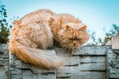 Ginger Cat Closeup Portrait On Blurred Background poster