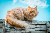 Portrait Of Ginger Cat Lying On A Stone Fence Against Blue Sky poster