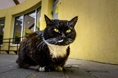 Black Cat With Vivid Yellow Eyes Lying On Pavement Against Yellow Wall poster
