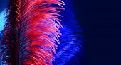Red and blue feather on blue background. Carnival.  poster