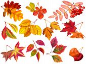 Autumn Leaf. Maple Fall Leaves, Fallen Foliage And Autumnal Nature Leafage. September Oak, Acorn Or  poster