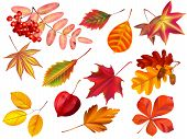 Color Autumn Leaves. Fallen Leaves, Colored Dry Leaf And Yellow Leaves. Rowan, Oak Or Maple Foliage  poster