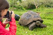 Wildlife photographer and tourist on Galapagos Islands photographing Giant Tortoise. Animals wildlif poster