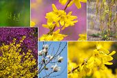 Spring Collage With Bright Colors. Collage Showing Spring Bright Colors. poster